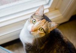 Cat-gal1