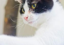 Cat-gal3