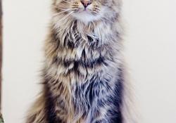 Cat-gal5