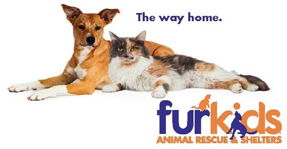 Atlanta's Largest No Kill Animal Shelter & Rescue | Dog