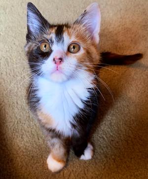 Atlanta S Largest No Kill Animal Shelter Rescue Dog Cat Adoption Furkids Georgia S Animal Rescue No Kill Shelter