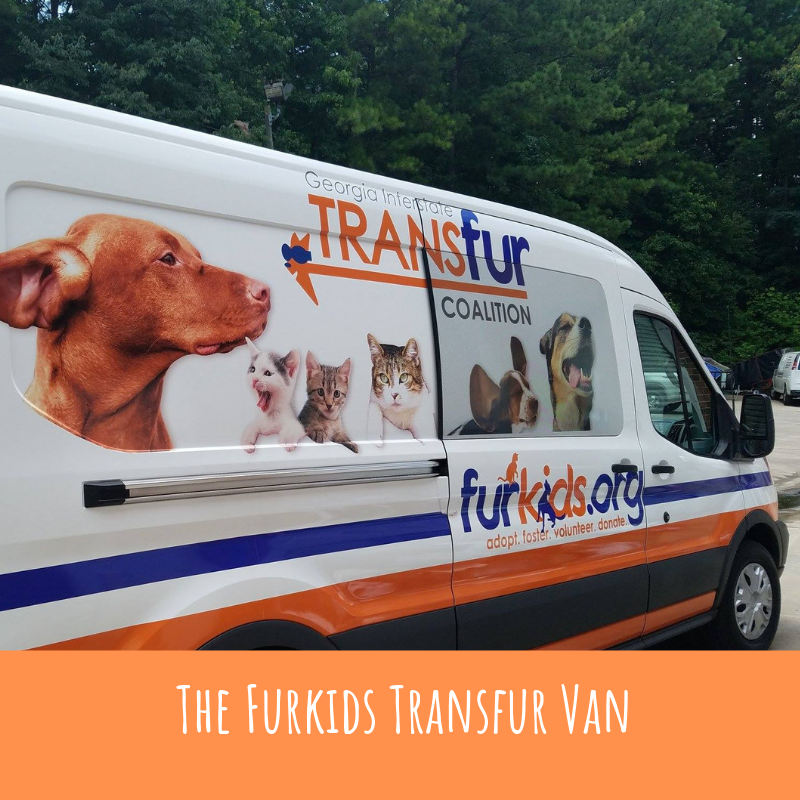 Atlanta-based Furkids Disrupts Traditional Animal Adoption