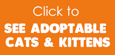 Click to see adoptable cats & kittens