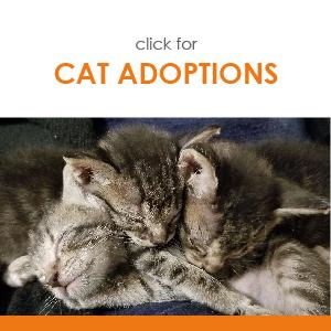 click for CAT ADOPTIONS