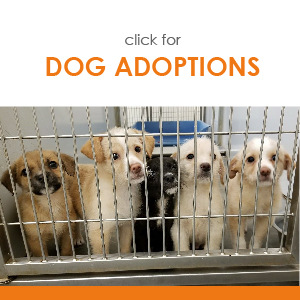 click for DOG ADOPTIONS