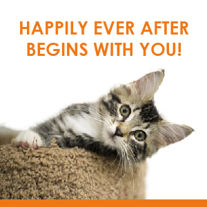 Happily Ever After Begins With You!