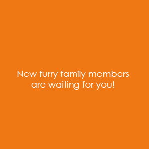 New furry family members are waiting for you!