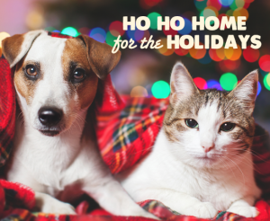 All pets deserve a home for the holidays!