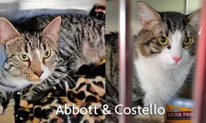 A TransFUR Coalition Success Story - Abbott & Costello's Journey