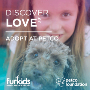 Discover Love February 16 & 17 at Furkids Locations in Select Atlanta Petco Stores