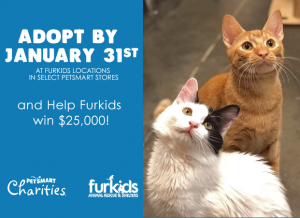 Adopt by January 31 and Help Furkids win $25,000!