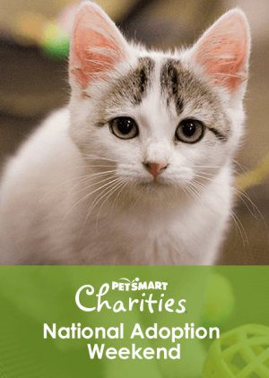 Join Furkids at PetSmart Charities' National Adoption Weekend, February 22-24!