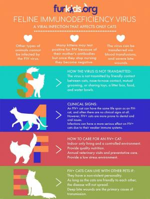 Open Your Home — and Your Heart — to an FIV+ Cat