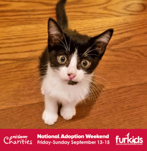It's a BOGO on Kittens and Cats this Weekend at Furkids in PetSmart!