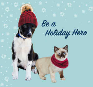 Home for the Holidays - A Big Year for Furkids