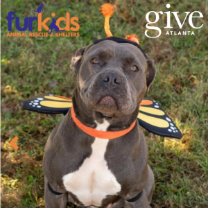 Help Furkids Win The 2018 Give Atlanta Challenge!