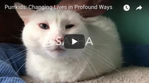 Purrkids: Changing Lives in Profound Ways