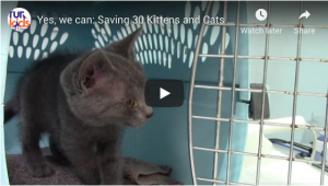 Yes, we can: Saving 30 Kittens and Cats from Augusta Animal Control