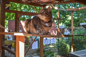 A Catio Gives Your Kitty Safe Access to the Great Outdoors