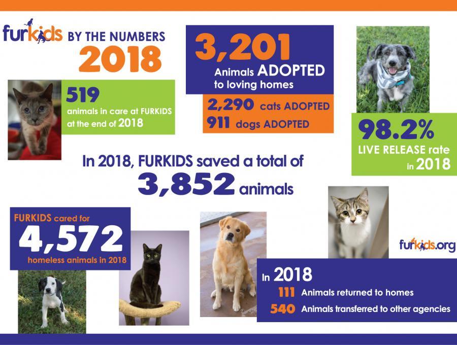 Statistics | Furkids - Georgia's Animal Rescue & No-Kill Shelter