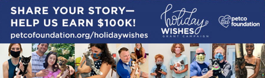 Submit Your Adoption Story - Help Furkids Win $100,000