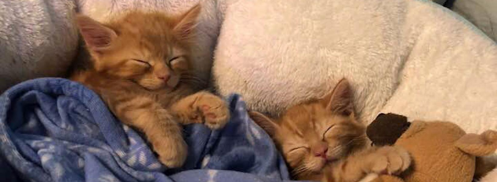 Humane Society Cats Are Social Animals Adopt One Kitten For 125 And Two For Just 200 Washington Post Atlantas Largest No Kill Animal Shelter Rescue Dog Cat