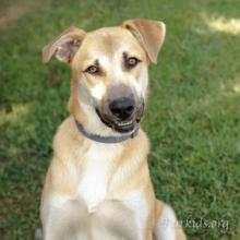 Dog Adoptions   Dog Shelter Atlanta   Furkids - Georgia's