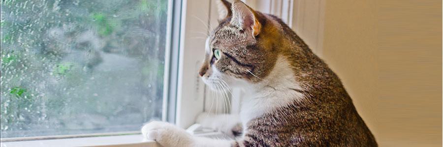 outdoor cat furniture